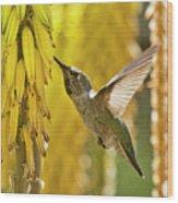 The Hummingbird And The Yellow Aloe  Wood Print