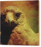 The Hunter . Portrait Of A Hawk . Texture . 40d7877 Wood Print