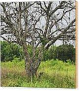 The Hunting Tree Wood Print