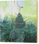 The Hydrant Bird Wood Print