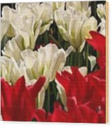 The Image Of A Tulip Wood Print