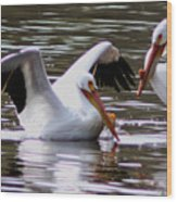 The Impressive Landing Pelican Wood Print