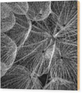 The Inner Weed 2 Monochrome Wood Print
