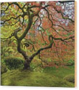 The Japanese Maple Tree In Spring Wood Print