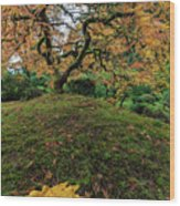 The Japanese Maple Tree In Autumn 2016 Wood Print