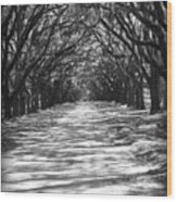 Live Oaks Lane With Shadows - Black And White Wood Print