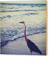 The Joy Of Ocean And Bird Wood Print