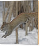 The Jumping American Red Squirrel Wood Print