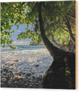 The Jungle At Onomea Bay  Wood Print