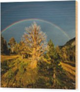 The Juniper's Last Crown Wood Print