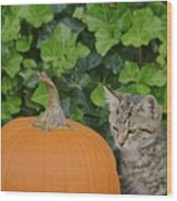 The Kitten And The Pumpkin Wood Print
