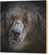 The Kodiak Bear Wood Print by Animus Photography