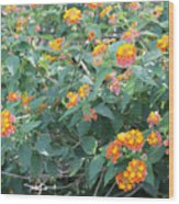 The Lantana In The Near 20 Wood Print