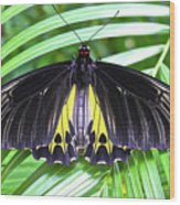 The Largest Butterfly In The World Wood Print