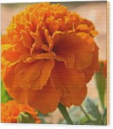 The Last Marigold Wood Print