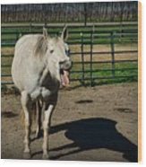 The Laughing Horse Wood Print