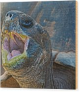 The Laughing Tortoise Wood Print