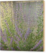 The Lavender Outside Her Window Wood Print