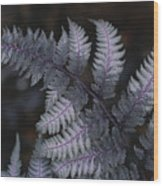 The Leaf Of A Japanese Painted Fern Wood Print