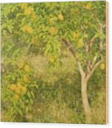 The Lemon Tree Wood Print