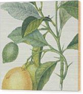The Lemon Tree Wood Print