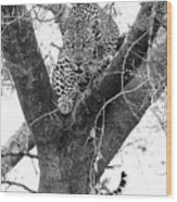 The Leopard's Stare Wood Print