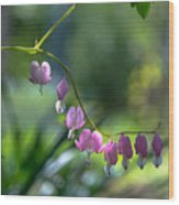 The Light In Our Bleeding Hearts Wood Print