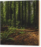 The Light In The Forest No. 2 Wood Print