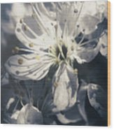 The Light Of Spring Petals Wood Print