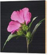 The Light Rose Of Sharon 2017 Square Wood Print