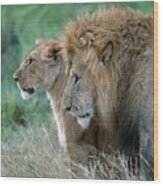 The Lion And His Lioness Wood Print