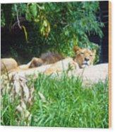 The Lion Awakes Wood Print