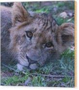 The Lion Cub Wood Print