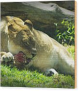 The Lion Eats Today Wood Print