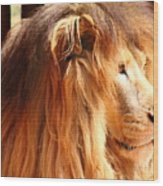 The Lion King's New Hairdont Wood Print