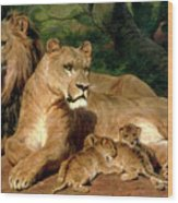 The Lions At Home Wood Print