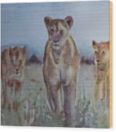 The Lions Of Africa 1 Wood Print
