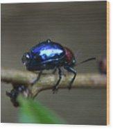 The Little Bug In The Rain Wood Print