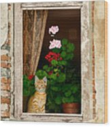 The Little Tuscan Tiger Wood Print by Bob Nolin
