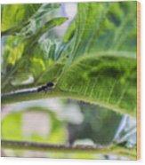 The Lone Ant Wood Print