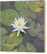 The Lone Bloom Wood Print