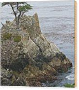 The Lone Cypress - California Wood Print by Brendan Reals
