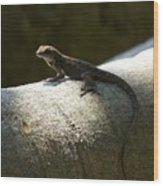 The Lone Lizard Wood Print