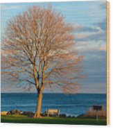 The Lone Maple Tree Wood Print