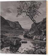 The Lone Tree Of Glencoe Wood Print by Ben Spencer