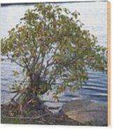 The Lone Tree Wood Print
