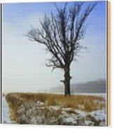 The Lone Tree Wood Print by Trina Prenzi