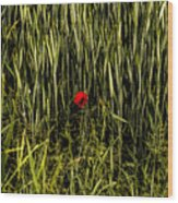The Loneliness Of A Poppy Wood Print