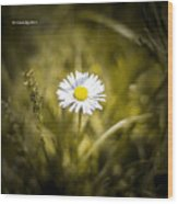 The Lonely Daisy Wood Print