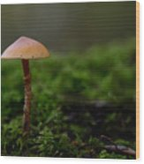 The Lonely Mushroom Wood Print